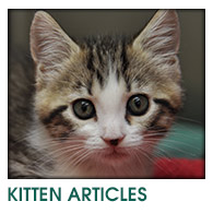 Kitten Articles