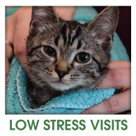 Fern Creek Wellness Center Low Strees Visits