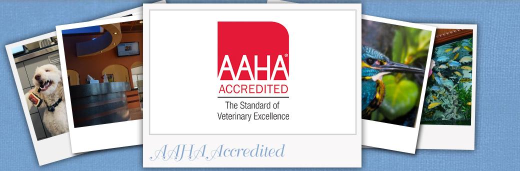 Fern Creek Wellness Center is AAHA Accredited