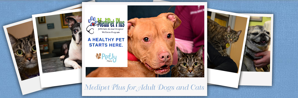 Medipet Plus for Adult Dogs and Cats