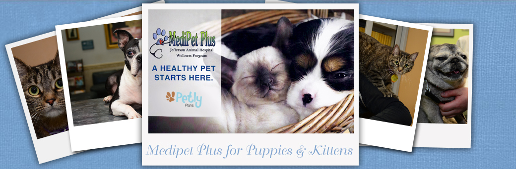 Medipet Plus for Puppies and Kittens