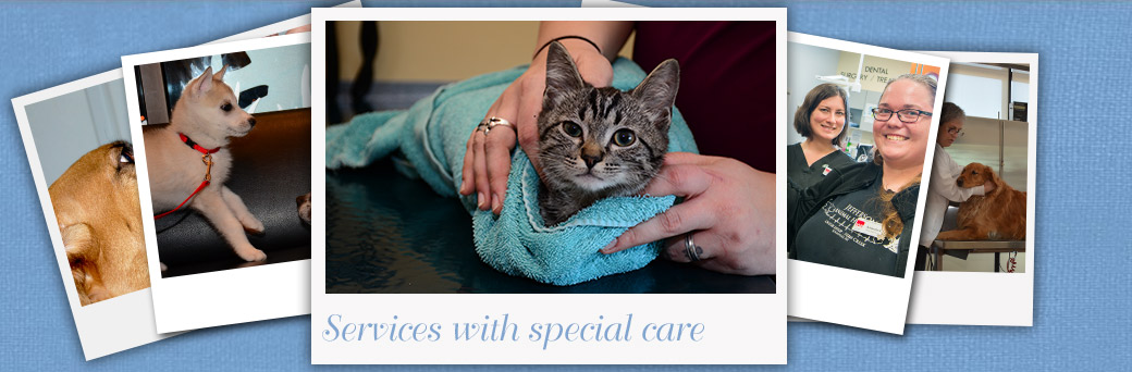 Fern Creek Medical Center Veterinarian Services