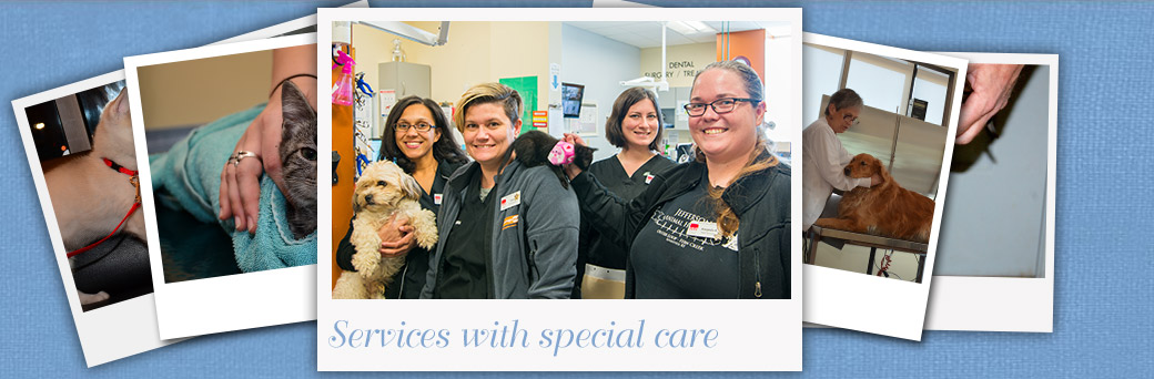 Fern Creek Medical Center Vet Services