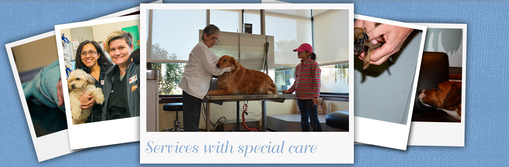 Jefferson Animal Hospital Fern Creek Medical Center Services