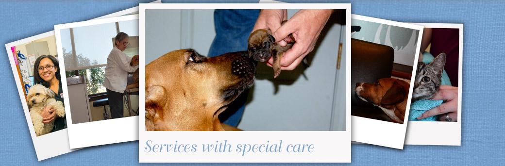 Jefferson Animal Hospital Fern Creek Services