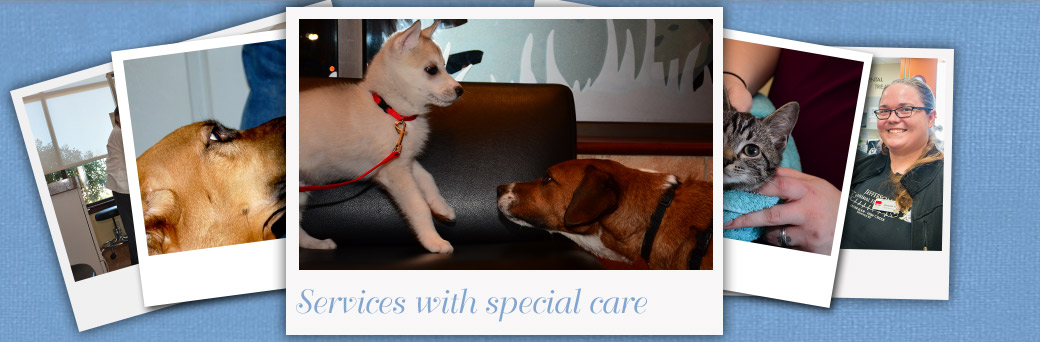 Jefferson Animal Hospital Fern Creek Pet Services