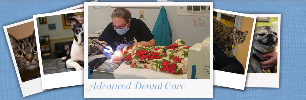 Jefferson Animal Hospital Fern Creek Advanced Dental Care