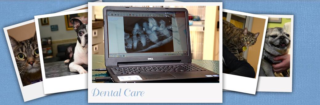 Jefferson Animal Hospital Fern Creek Dental Care