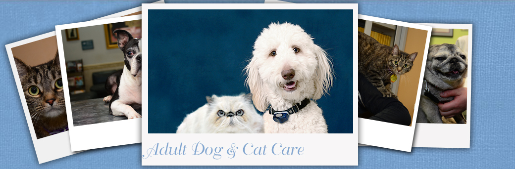 Dog and Cat Care at Fern Creek Medical Center
