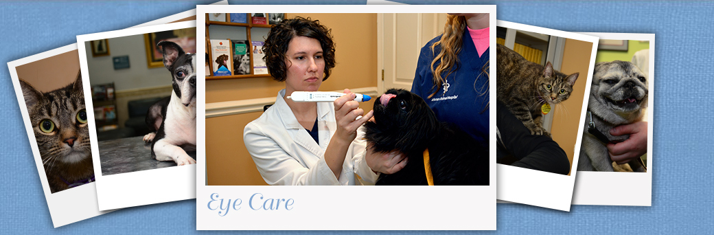Jefferson Animal Hospital Fern Creek Advanced Eye Care