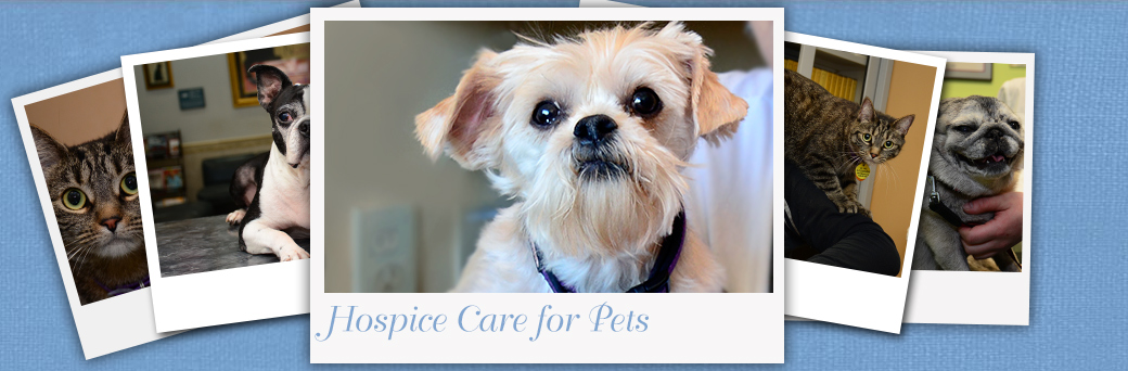 Hospice for Pets at Fern Creek Medical Center