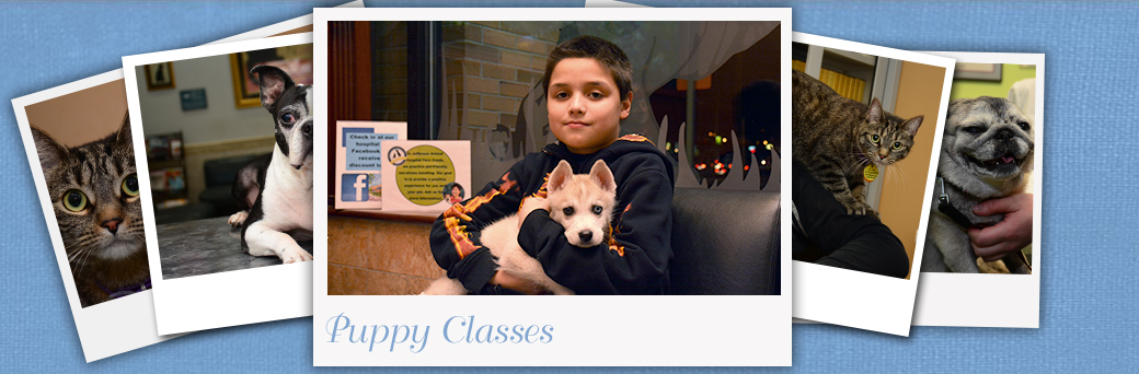 Jefferson Animal Hospital Fern Creek Puppy classes