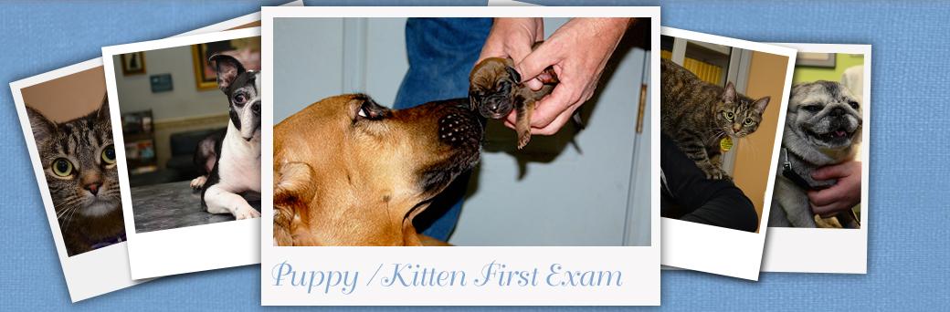 Jefferson Fern Creek Puppy Kitten First Exam