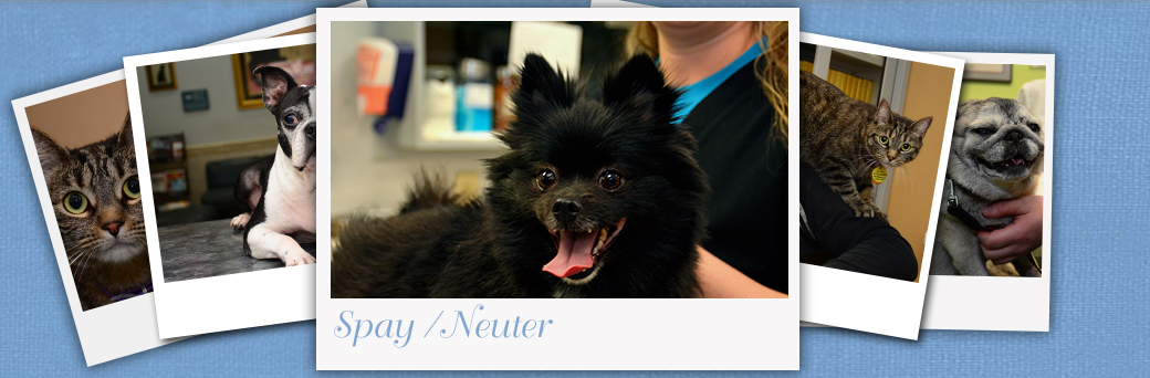 Jefferson Animal Hospital Fern Creek Spay Neuter