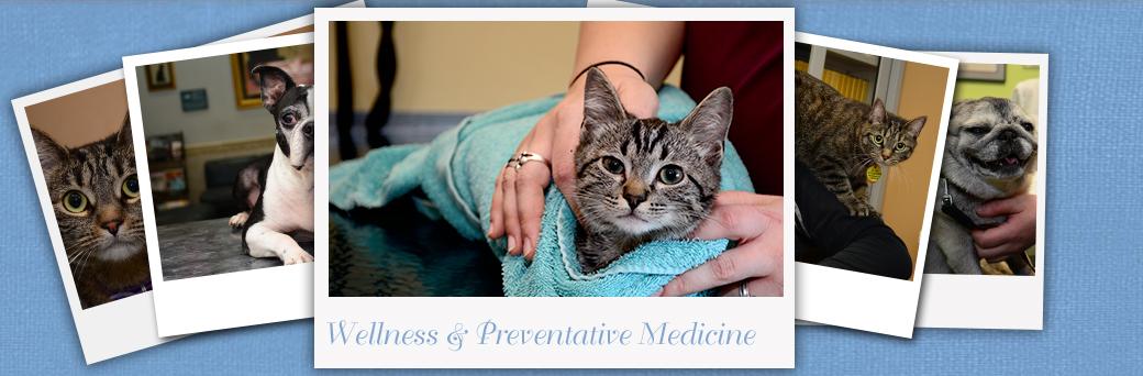 Wellness pet care at Fern Creek Medical Center