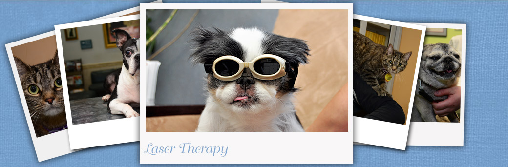 Laser Therapy for Pets at Fern Creek Medical Center
