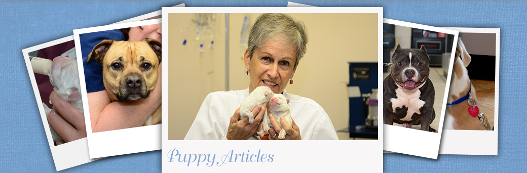 Puppy Articles at Jefferson Animal Hospital