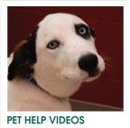 PET HELP VIDEOS