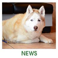 Fern Creek Wellness Center News