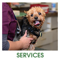 Veterinary Services at Fern Creek Wellness Center