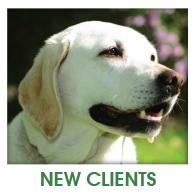 Fern Creek Wellness Center New Clients