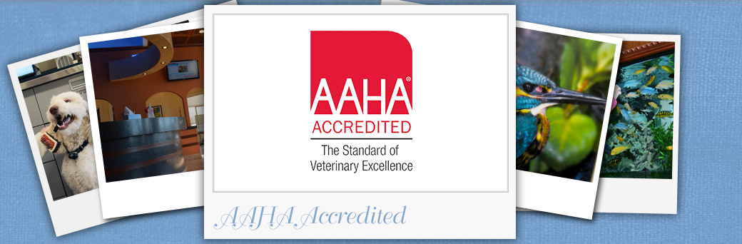 Fern Creek Wellness Center is AAHA Accredited