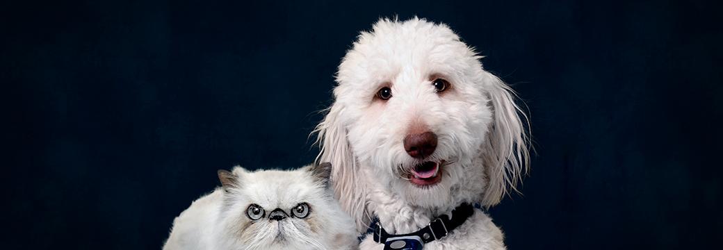 Low Stress Veterinary Exams