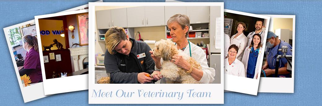 Jefferson Animal Hospital Fern Creek Our Team Low Stress Handling