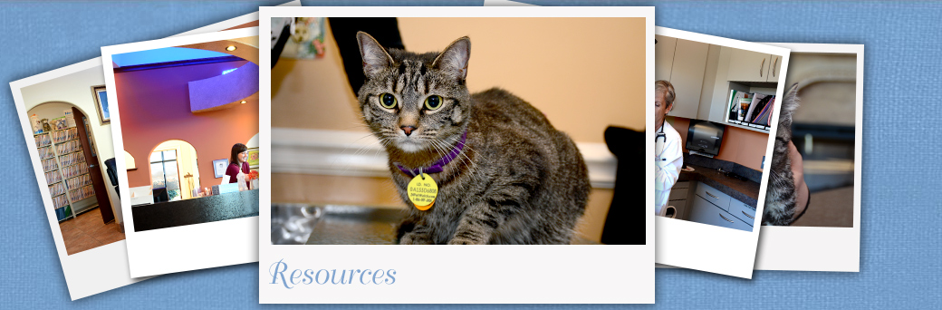Jefferson Animal Hospital Fern Creek Medical Center Resources for Cats