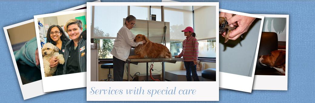 Jefferson Animal Hospital Fern Creek Medical Center Services