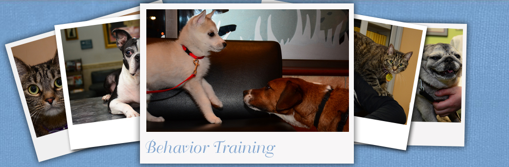 Jefferson Animal Hospital Fern Creek Behavior Training