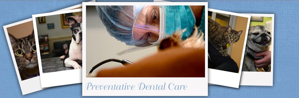 Jefferson Animal Hospital Fern Creek Preventative Dental Care