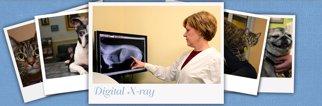 Jefferson Animal Hospital Fern Creek Digital X-ray