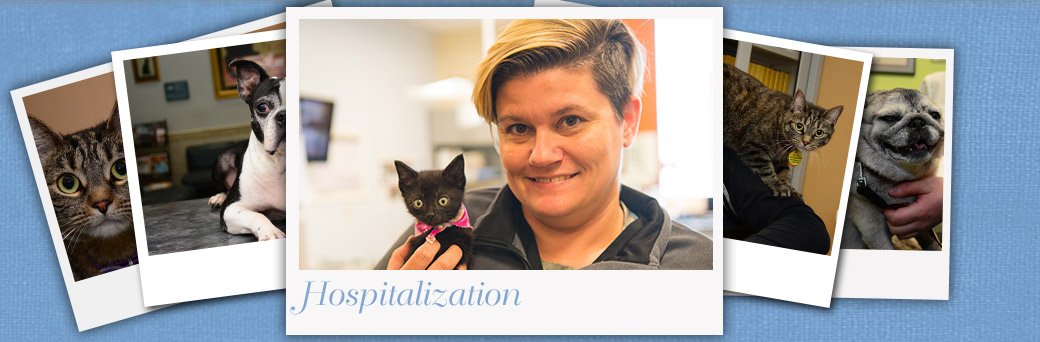 Jefferson Animal Hospital Fern Creek Hospitalization