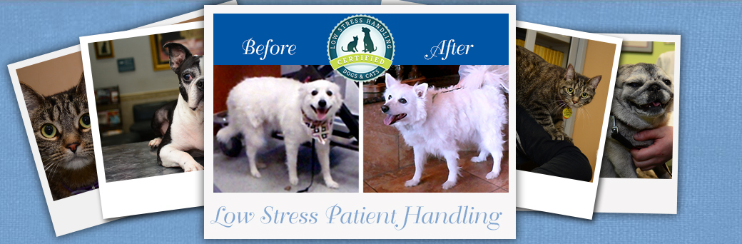 Jefferson Animal Hospital Fern Creek Low Stress Handling