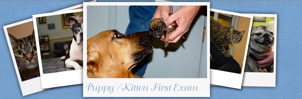 Jefferson Fern Creek Puppy Kitten First Exam