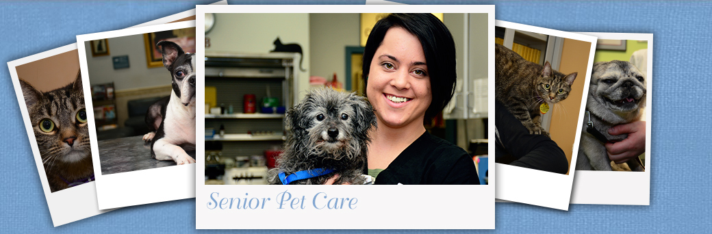 Jefferson Animal Hospital Fern Creek Senior Pet Care