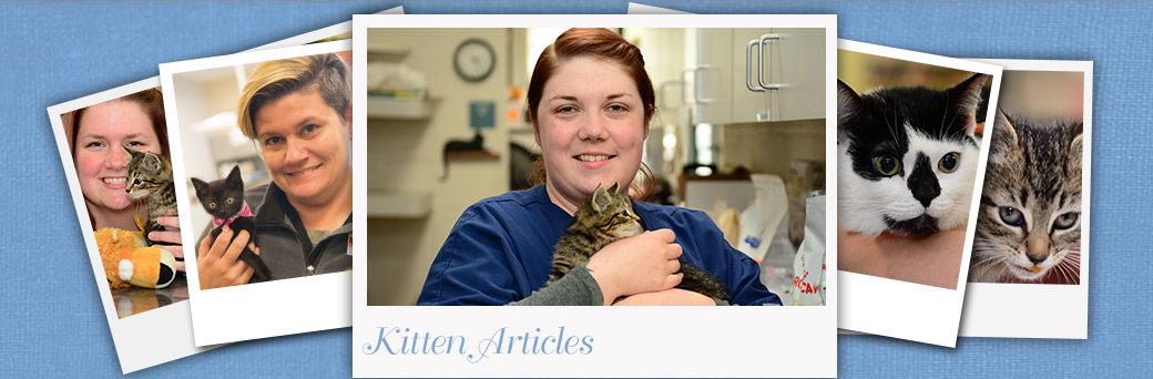 Kitten Articles at Jefferson Animal Hospital